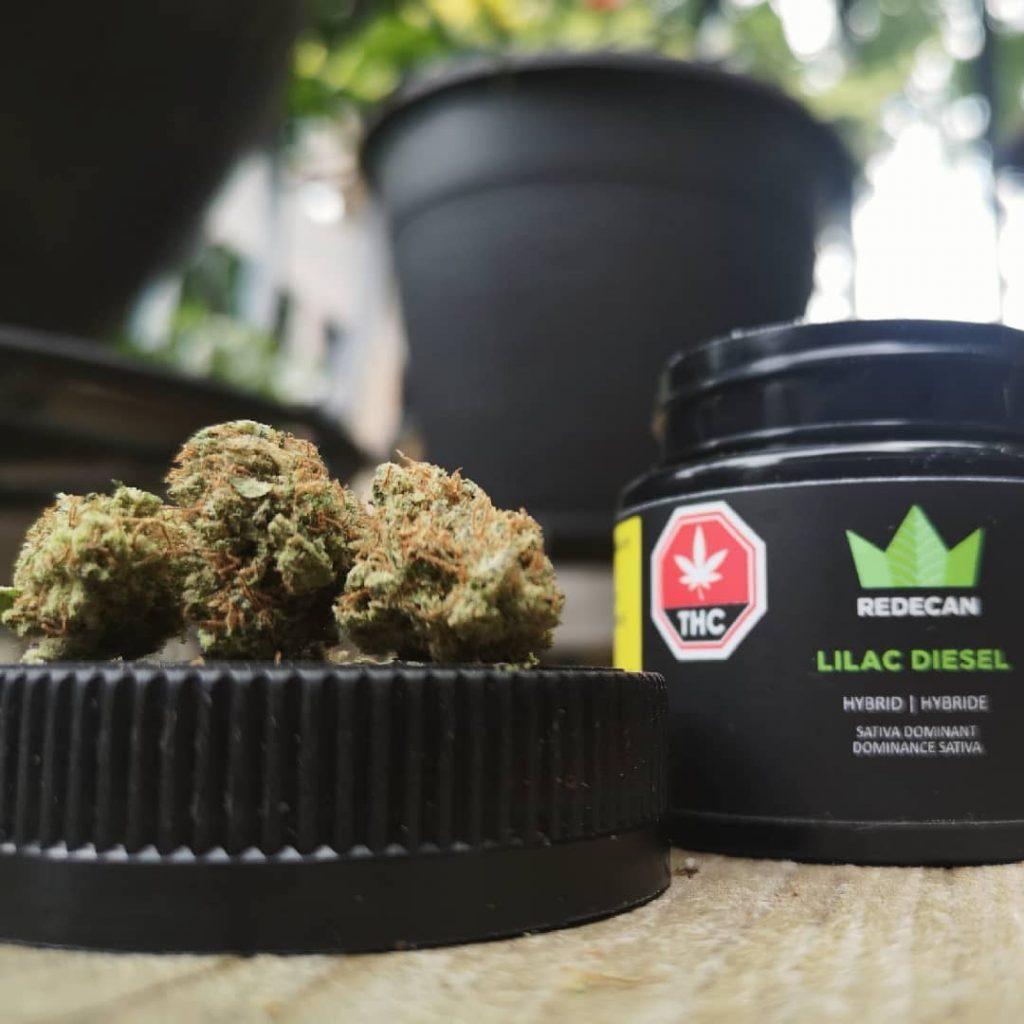 Redecan Lilac Diesel